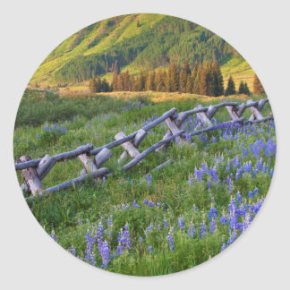 USA, Colorado. Lupines and split rail fence Classic Round Sticker
