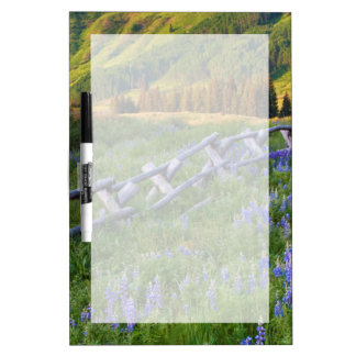 USA, Colorado. Lupines and split rail fence Dry-Erase Board
