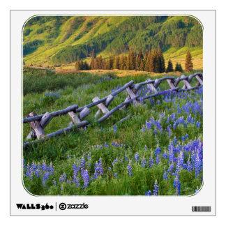 USA, Colorado. Lupines and split rail fence Wall Sticker
