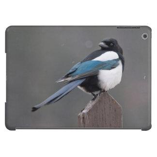USA, Colorado, Magpie In Estes Park Cover For iPad Air