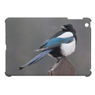 USA, Colorado, Magpie In Estes Park iPad Mini Covers