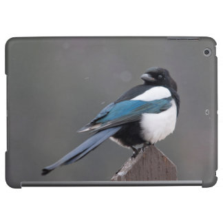 USA, Colorado, Magpie In Estes Park iPad Air Covers