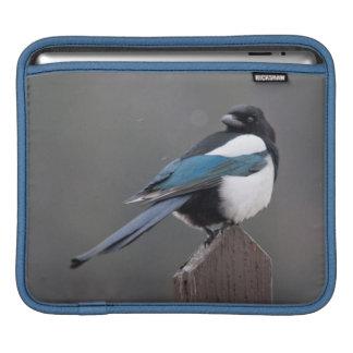 USA, Colorado, Magpie In Estes Park iPad Sleeve
