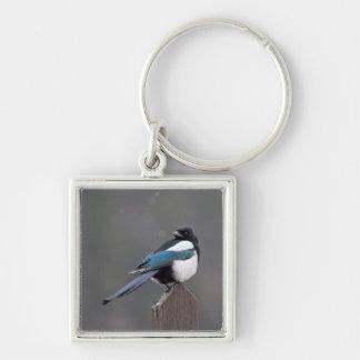 USA, Colorado, Magpie In Estes Park Keychain