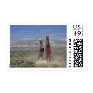 USA, Colorado, Moffat County. Two wild horses Postage