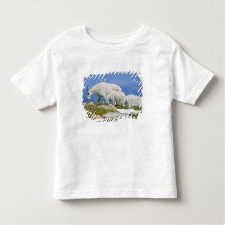 USA, Colorado, Mount Evans. Close-up of female Toddler T-shirt