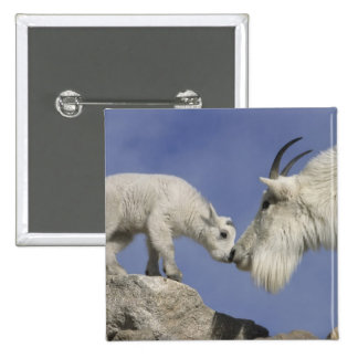 USA, Colorado, Mount Evans. Mountain goat mother 2 Inch Square Button