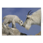 USA, Colorado, Mount Evans. Mountain goat mother Greeting Card