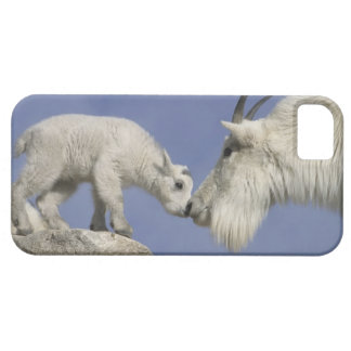 USA, Colorado, Mount Evans. Mountain goat mother iPhone 5 Cases