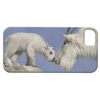 USA, Colorado, Mount Evans. Mountain goat mother iPhone 5 Cases