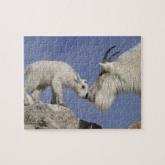 USA, Colorado, Mount Evans. Mountain goat mother Jigsaw Puzzle
