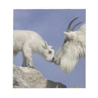 USA, Colorado, Mount Evans. Mountain goat mother Notepad