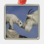 USA, Colorado, Mount Evans. Mountain goat mother Christmas Tree Ornaments