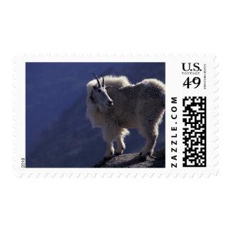 USA Colorado Mountain goat Oreamnos Postage Stamps