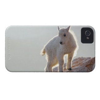 USA, Colorado, Mt. Evans. Close-up of young iPhone 4 Case-Mate Cases