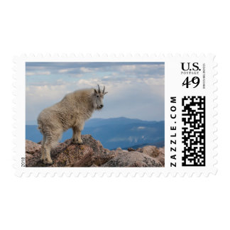 USA, Colorado, Mt. Evans. Mountain Goat Stands Postage