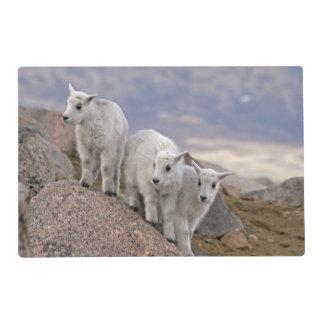 USA, Colorado, Mt. Evans. Three mountain goat Placemat