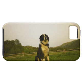 USA, Colorado, New Castle iPhone 5 Covers