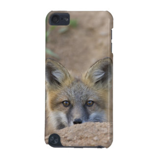 USA, Colorado, Pike National Forest. Shy red fox iPod Touch (5th Generation) Covers