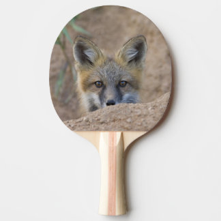 USA, Colorado, Pike National Forest. Shy red fox Ping Pong Paddle