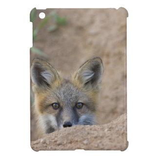 USA, Colorado, Pike National Forest. Shy red fox iPad Mini Case