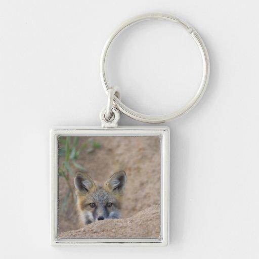 USA, Colorado, Pike National Forest. Shy red fox Keychain
