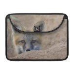 USA, Colorado, Pike National Forest. Shy red fox MacBook Pro Sleeves