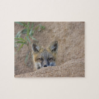 USA, Colorado, Pike National Forest. Shy red fox Puzzles