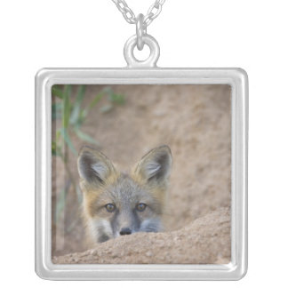 USA, Colorado, Pike National Forest. Shy red fox Square Pendant Necklace