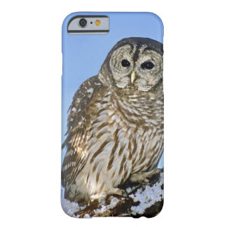 USA, Colorado. Portrait of barred owl perched on Barely There iPhone 6 Case