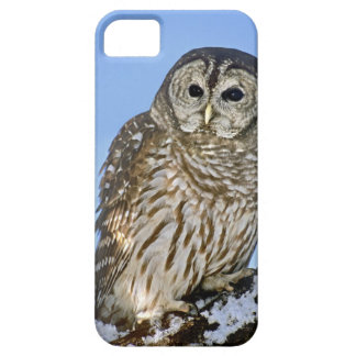 USA, Colorado. Portrait of barred owl perched on iPhone SE/5/5s Case