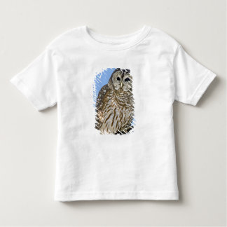 USA, Colorado. Portrait of barred owl perched on Toddler T-shirt
