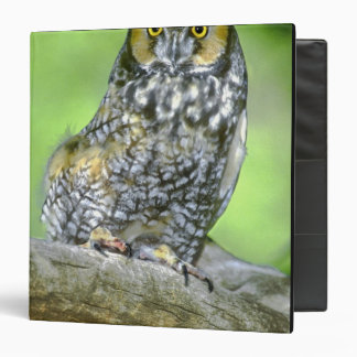 USA, Colorado. Portrait of long-eared owl Binders