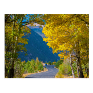 USA, Colorado. Road Flanked By Aspens Postcard