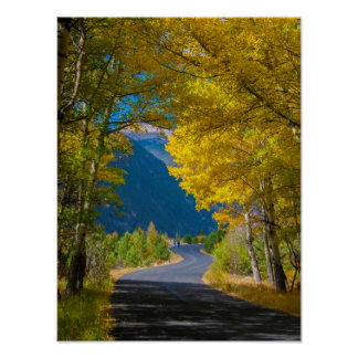 USA, Colorado. Road Flanked By Aspens Poster