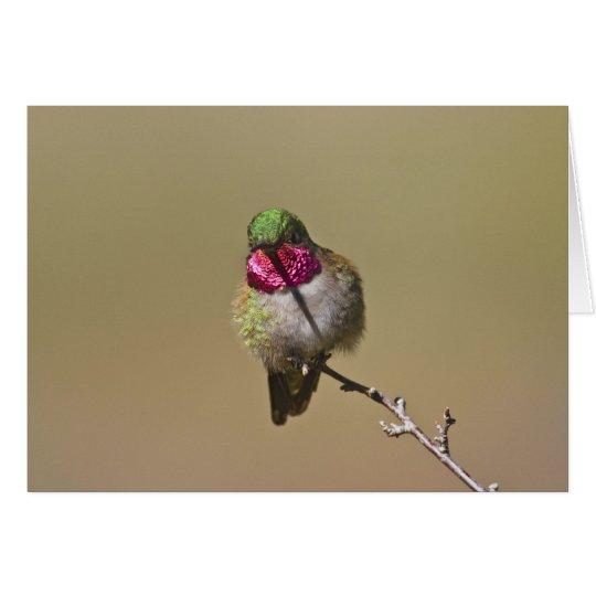 USA, Colorado, Rocky Mountain National Park, 2 Card