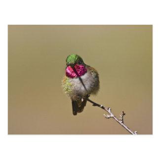 USA, Colorado, Rocky Mountain National Park, 2 Postcard