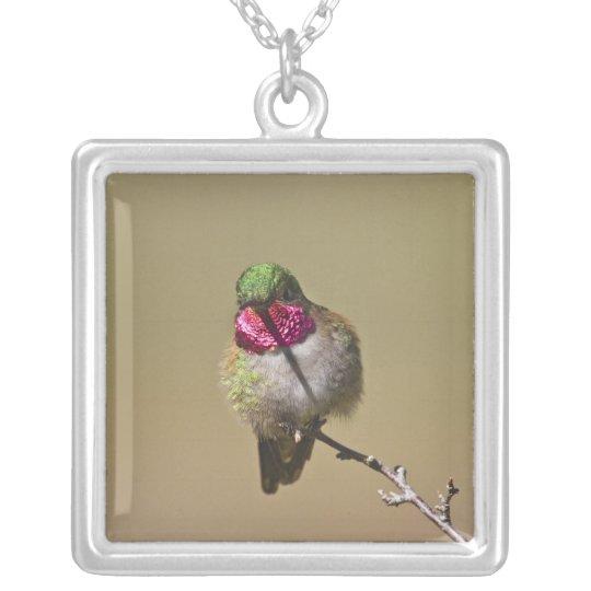 USA, Colorado, Rocky Mountain National Park, 2 Silver Plated Necklace