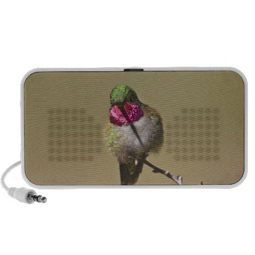 USA, Colorado, Rocky Mountain National Park, 2 Travelling Speakers