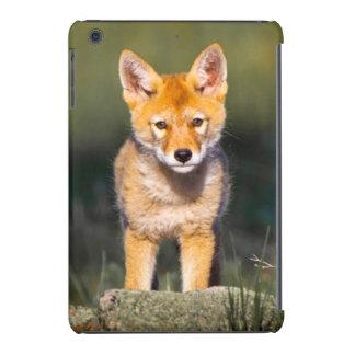 USA, Colorado, Rocky Mountain National Park iPad Mini Retina Covers