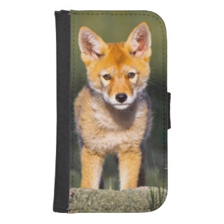 USA, Colorado, Rocky Mountain National Park Galaxy S4 Wallet Case