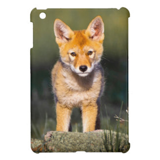 USA, Colorado, Rocky Mountain National Park Case For The iPad Mini