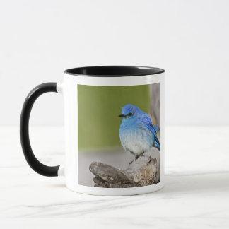 USA, Colorado, Rocky Mountain National Park, Mug
