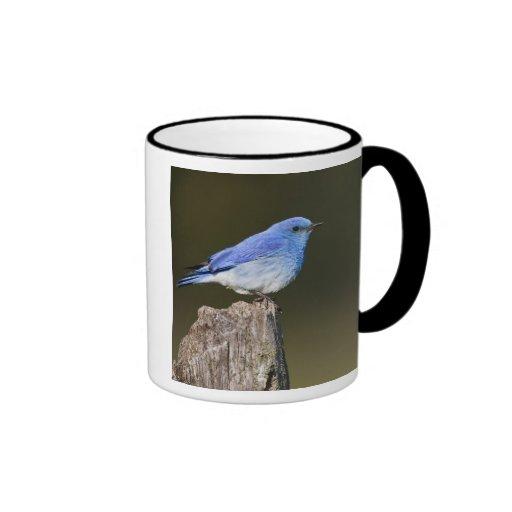 USA, Colorado, Rocky Mountain National Ringer Coffee Mug