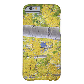 USA, Colorado, Rocky Mountains.  Intimate aspen 2 Barely There iPhone 6 Case