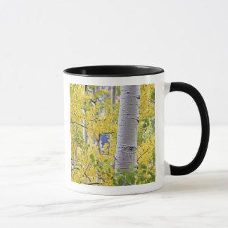 USA, Colorado, Rocky Mountains.  Intimate aspen 2 Mug