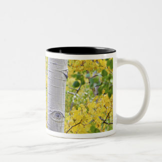 USA, Colorado, Rocky Mountains.  Intimate aspen 2 Two-Tone Coffee Mug