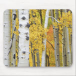 "USA, Colorado, Rocky Mountains.  Intimate aspen Mouse Pad<br><div class=""desc"">COPYRIGHT David Svilar / DanitaDelimont.com 
