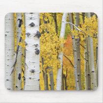 USA, Colorado, Rocky Mountains.  Intimate aspen Mouse Pad