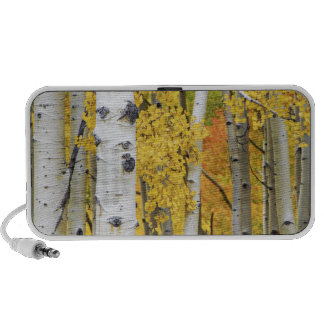 USA, Colorado, Rocky Mountains.  Intimate aspen Portable Speakers